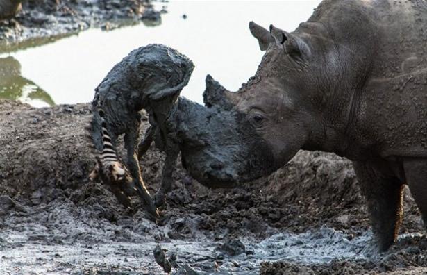 Hayvanlar dünyasından vahşi kareler! 69