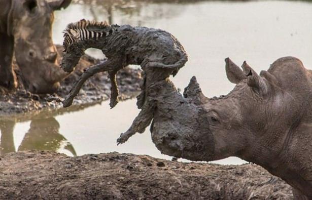 Hayvanlar dünyasından vahşi kareler! 70