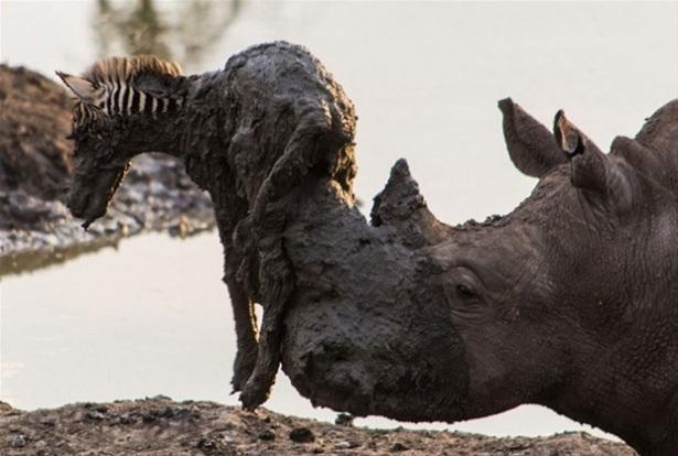 Hayvanlar dünyasından vahşi kareler! 71