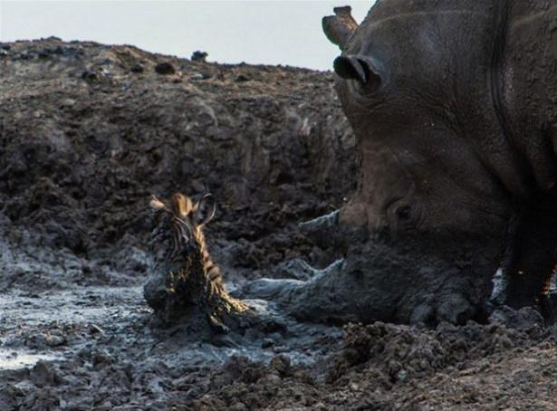 Hayvanlar dünyasından vahşi kareler! 72