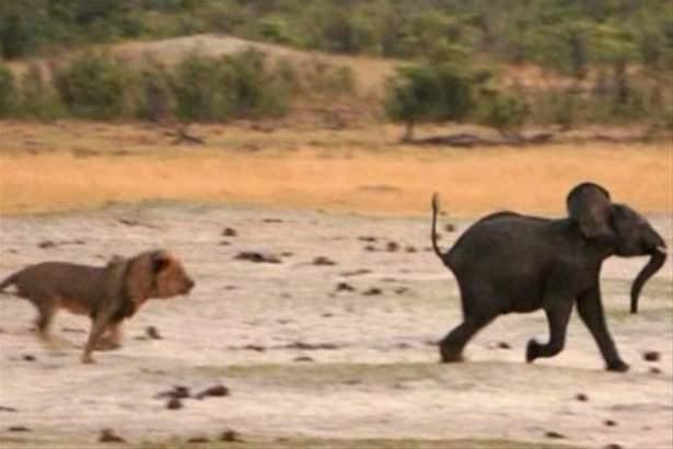 Hayvanlar dünyasından vahşi kareler! 73