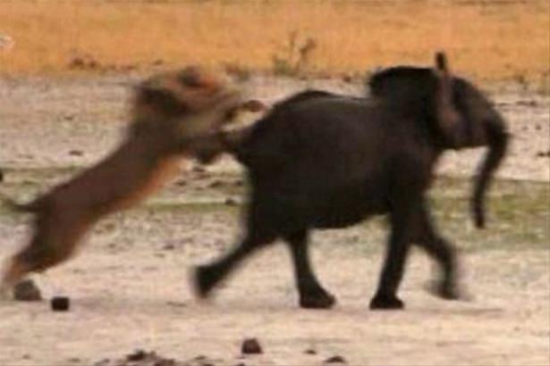 Hayvanlar dünyasından vahşi kareler! 74