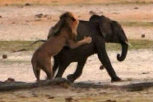 Hayvanlar dünyasından vahşi kareler! 75