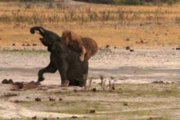 Hayvanlar dünyasından vahşi kareler! 77