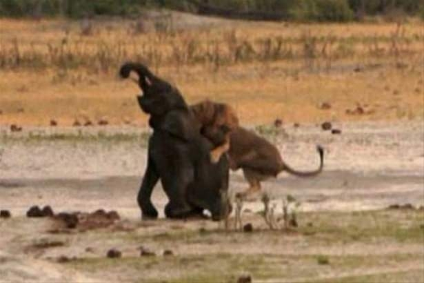 Hayvanlar dünyasından vahşi kareler! 78