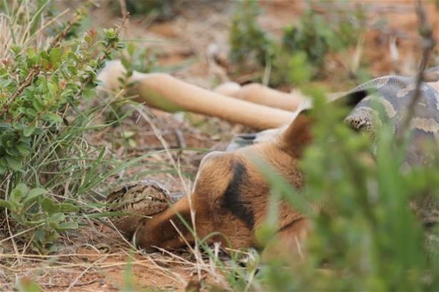 Hayvanlar dünyasından vahşi kareler! 8