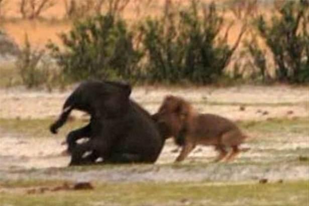 Hayvanlar dünyasından vahşi kareler! 80