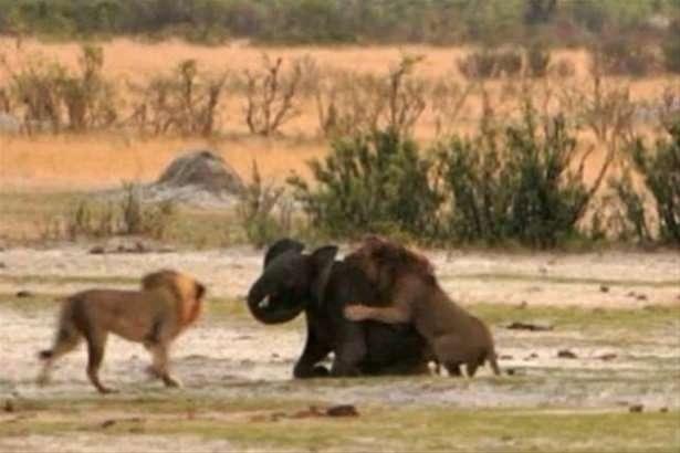 Hayvanlar dünyasından vahşi kareler! 81