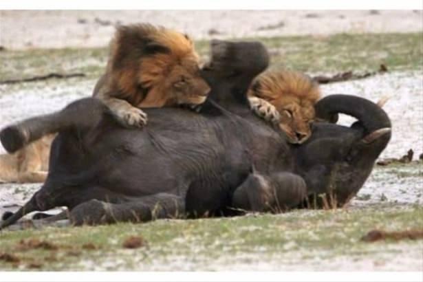 Hayvanlar dünyasından vahşi kareler! 82
