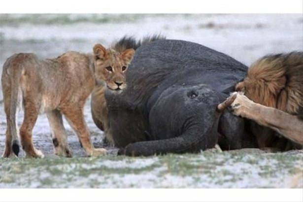Hayvanlar dünyasından vahşi kareler! 85