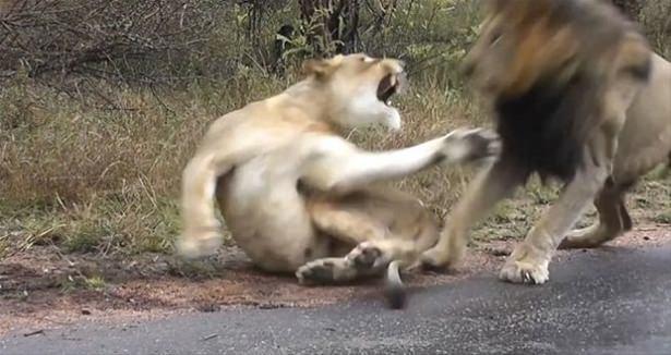Hayvanlar dünyasından vahşi kareler! 96