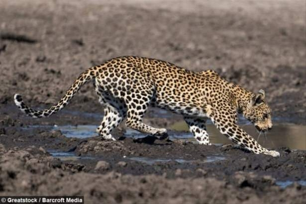 Hayvanlar dünyasından vahşi kareler! 97
