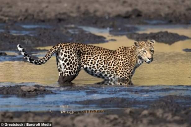 Hayvanlar dünyasından vahşi kareler! 98