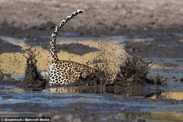 Hayvanlar dünyasından vahşi kareler! 99