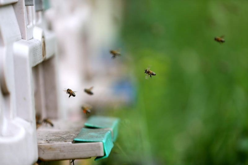 'Sokmayan arı'ya yoğun talep 1
