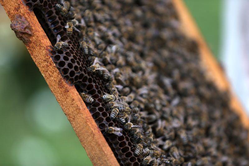 'Sokmayan arı'ya yoğun talep 2