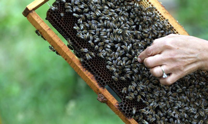 'Sokmayan arı'ya yoğun talep 3