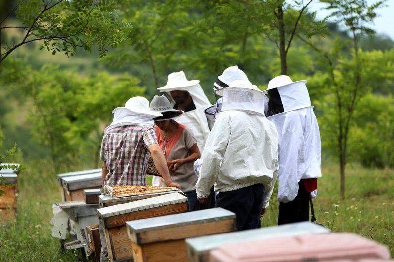 'Sokmayan arı'ya yoğun talep 4