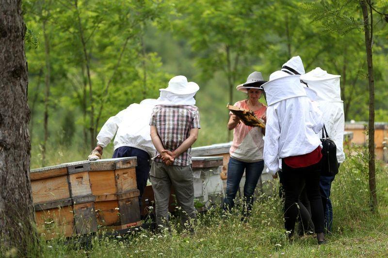 'Sokmayan arı'ya yoğun talep 5
