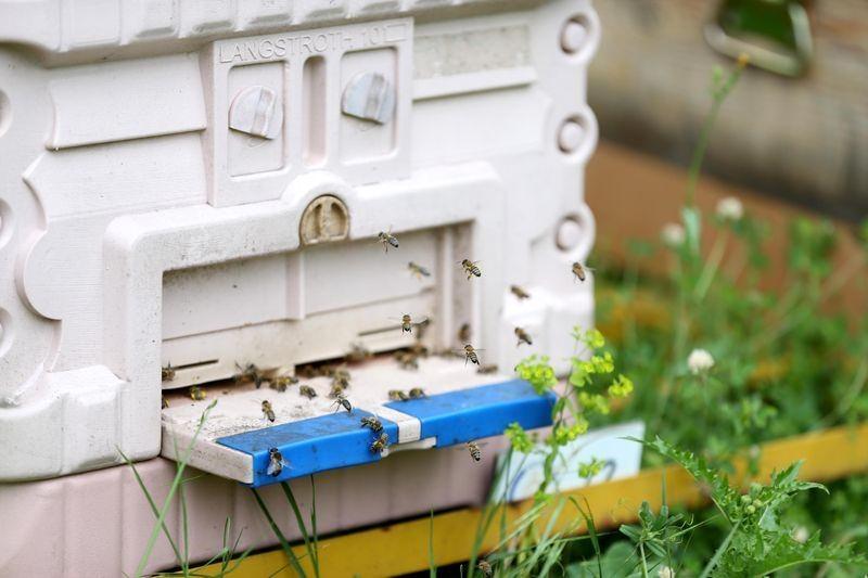 'Sokmayan arı'ya yoğun talep 9