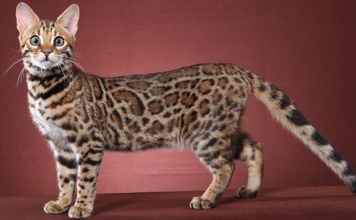 Bu kedi tam 22 bin dolar! 16