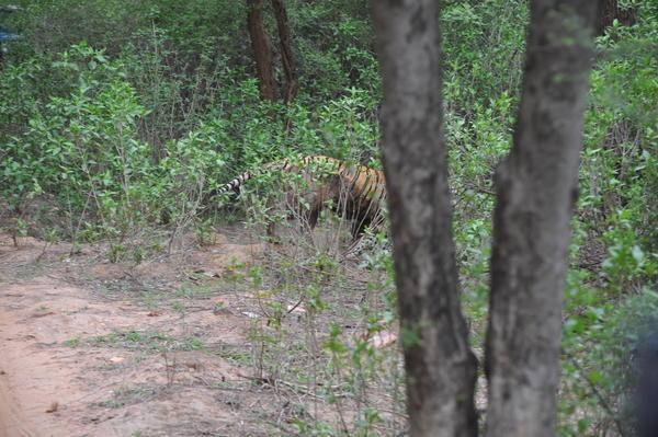 Leoparın inanılmaz av taktiği 38