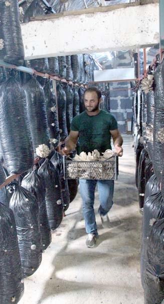 İşçiliği bırakıp mantar üreticisi oldu 3