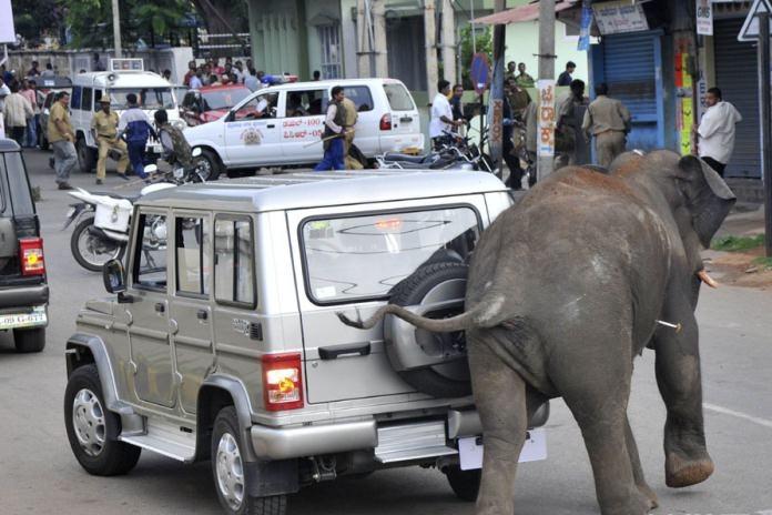 Sadece Hindistan'da görebileceğiniz fotoğraflar 21