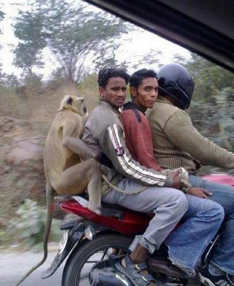 Sadece Hindistan'da görebileceğiniz fotoğraflar 33