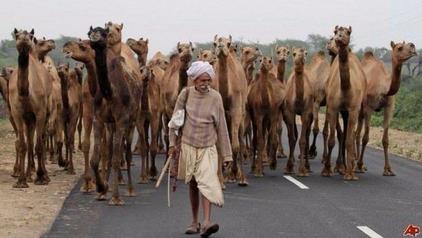 Sadece Hindistan'da görebileceğiniz fotoğraflar 42