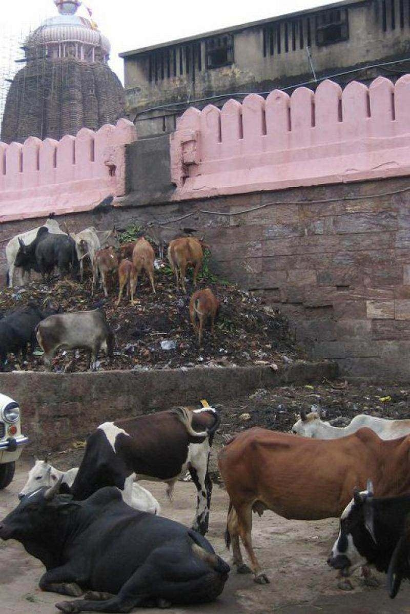 Sadece Hindistan'da görebileceğiniz fotoğraflar 5