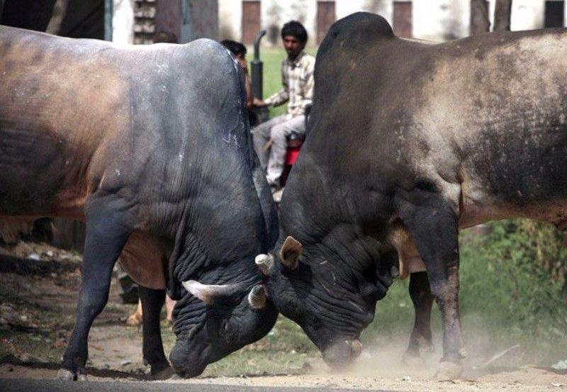 Sadece Hindistan'da görebileceğiniz fotoğraflar 57