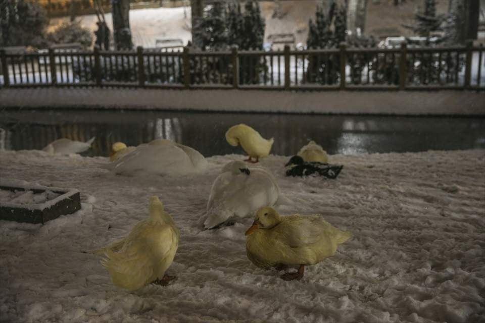 Türkiye'den muhteşem kar manzaraları 13