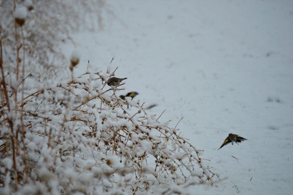 Türkiye'den kar manzaraları 120
