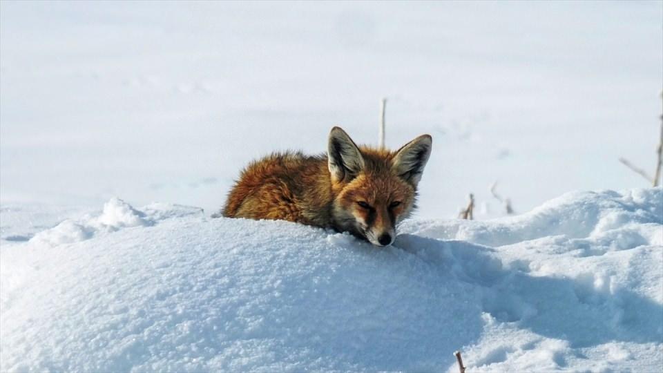 Türkiye'den kar manzaraları 129