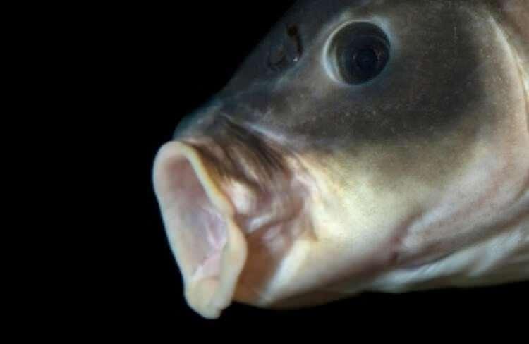 Dünyayı şaşırtan balık! 100 yıldan uzun süredir... 1