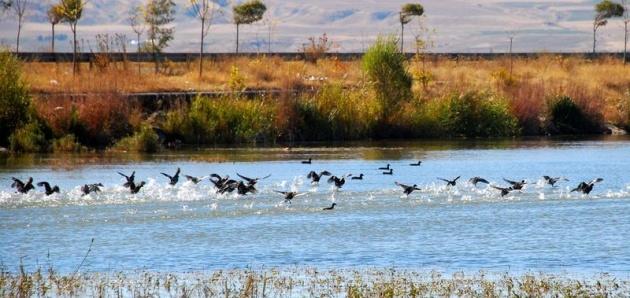 Van Gölü havzasının kuş cenneti: Bitlis 1