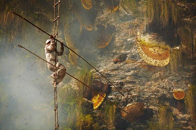Nepal yerlilerinin arılarla bal savaşı! 1