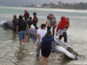 Akdeniz'de 13 metrelik dev balina