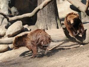 Almanya'nın hayvanat bahçesinden harika kareler
