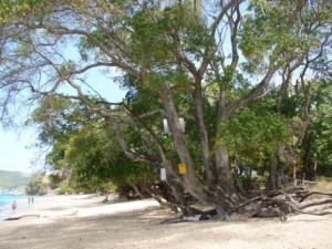 Bu ağaca dokunan pişman oluyor!
