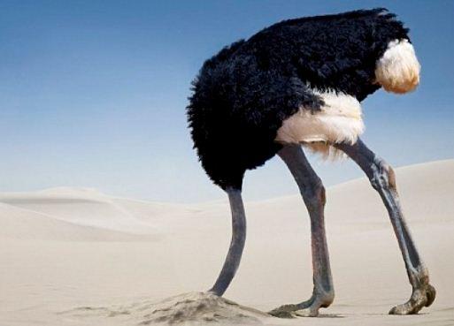 MEBden devrim gibi model: Deve Kuşu Modeli