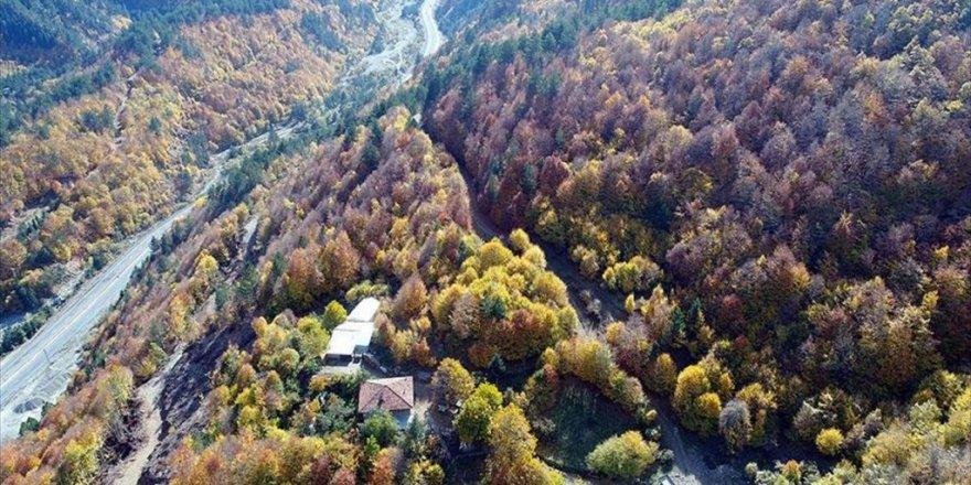 Anadolu'nun 'Yüce Dağı' Ilgaz Rengarenk