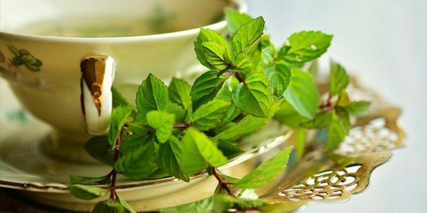 Mevsim hastalıklarından korunmak için bitki çayı tarifi