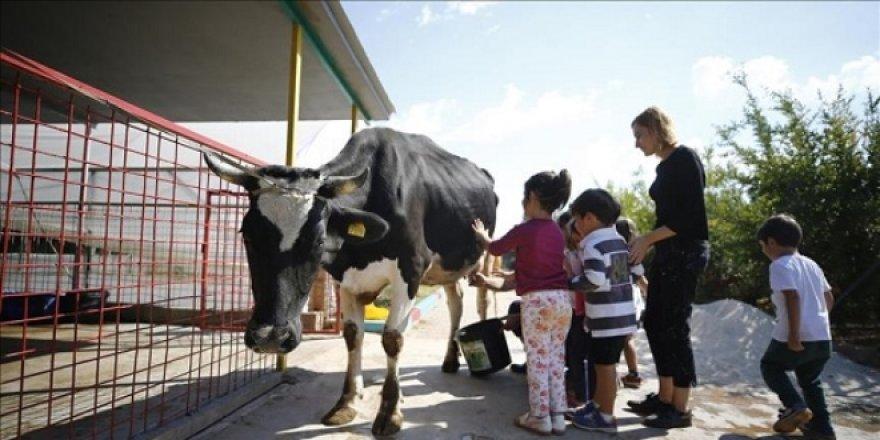 Anaokulunda çiftlik hayatı