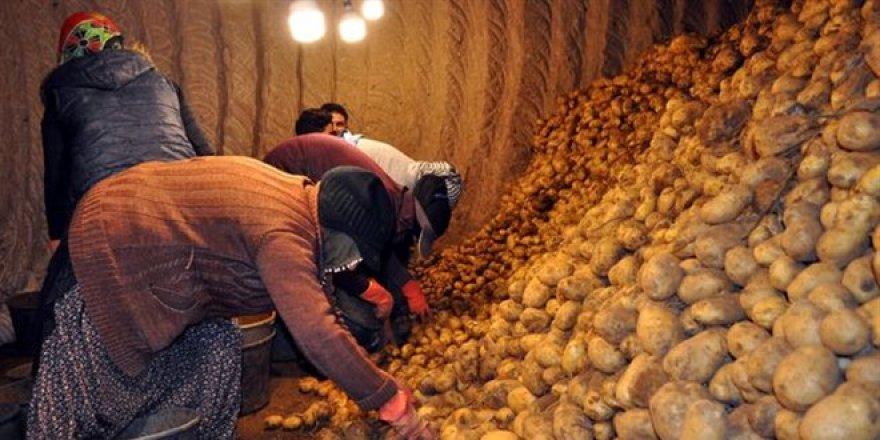Patates ve soğanı çiftçiden alıp, ihtiyaç sahiplerine ücretsiz vereceğiz