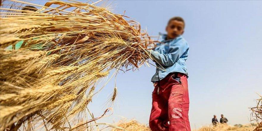 MEB'den İtiraf Gibi Açıklama! Yüzbinlerce çocuk 'işçi' oldu eğitimi bıraktı!