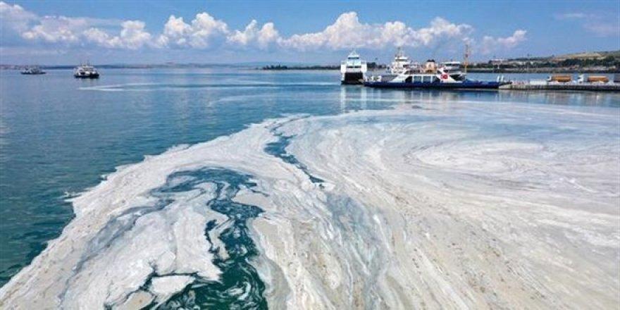 Marmara'dan çıkan balık tüketilir mi? Uzmanlar araştırdı!