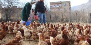 Atanamayan Öğretmen Eşine Destek Olmak İstedi: Tavuk Çiftliği Kurdu