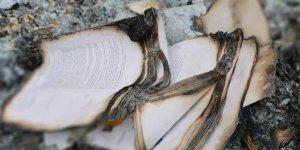 'Korkudan FETÖ elebaşının kitaplarını yaktılar'